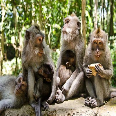 Лес обезьян Убуд Бали