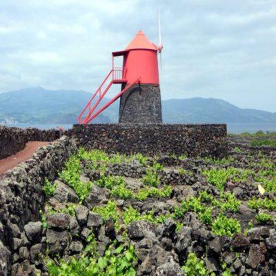 Виноградники Мадалены остров Пику Азорские острова Португалия