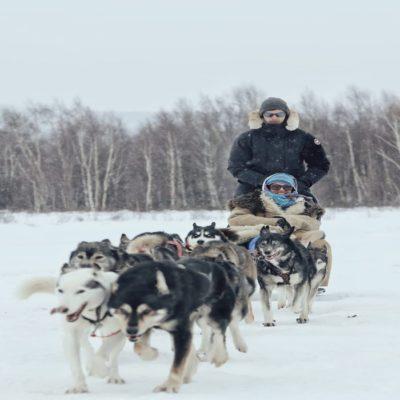 Катание на собачьей упряжке Камчатка