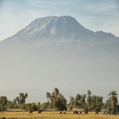 Национальный парк Амбосели Килиманджаро Кения