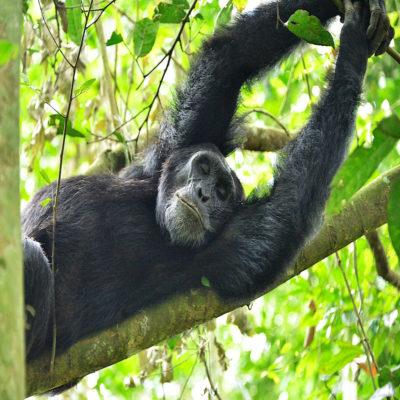 Национальный парк Мёрчисон Уганда