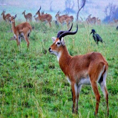 Национальный парк Мёрчисон 2 Уганда
