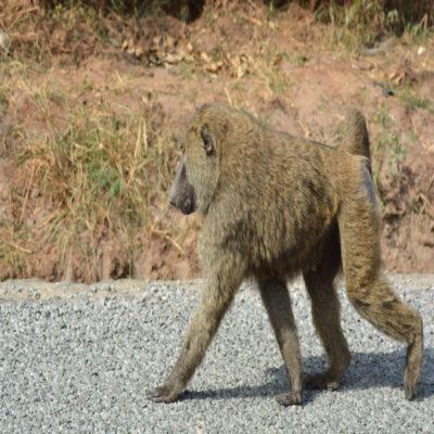 Национальный парк Семулики Уганда
