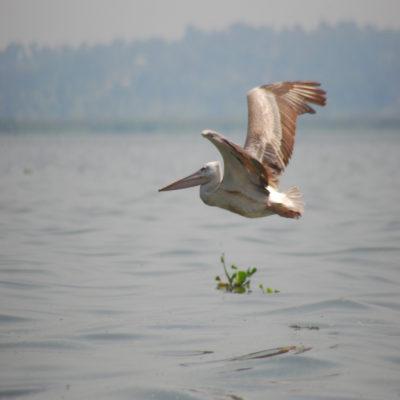 Озеро Виктория 1 Уганда