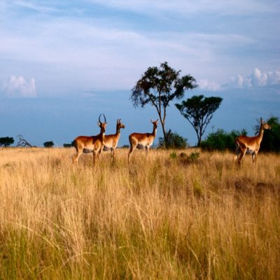 Парк Королевы Елизаветы Уганда