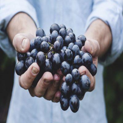 Виноград Долина Луары Франция
