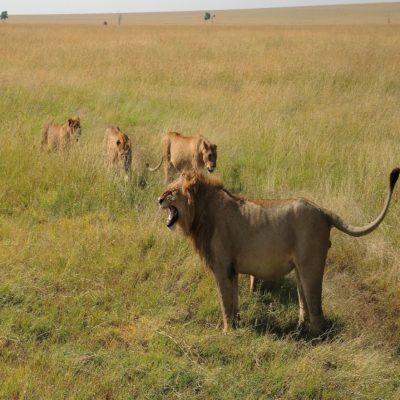 Национальный парк Масаи Мара Кения