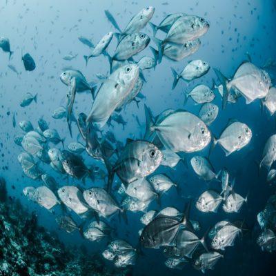 Рыбы Мальдивы