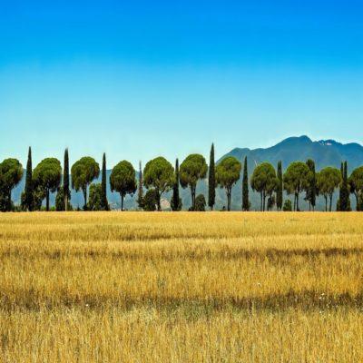 Для оформления Тоскана Италия