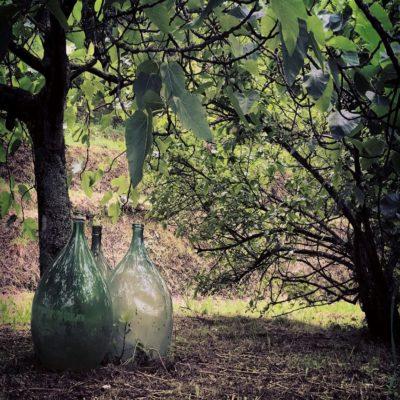 Оливковые рощи Тоскана Италия