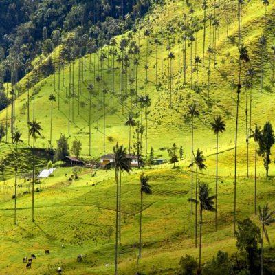 Долина Кокора Колумбия
