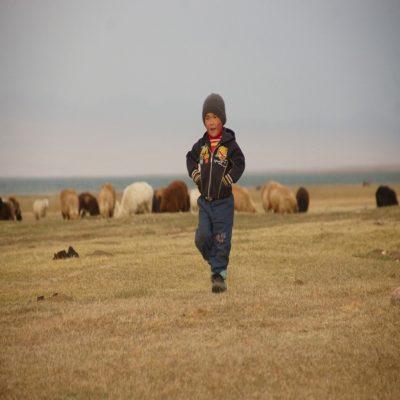 Маленький пастушок Кыргызстан