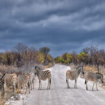 Национальный парк Этоша Намибия