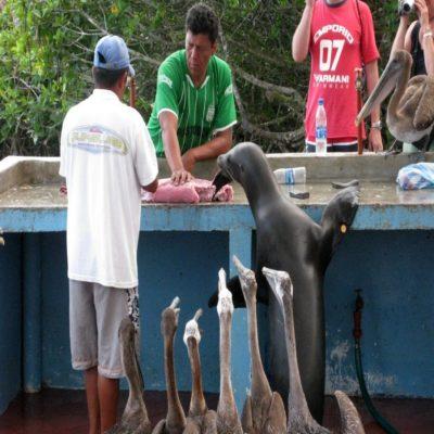 Рыбный рынок в Пуэрто-Айора Галапагосские острова Эквадор