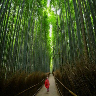 Бамбуковая роща в Киото Япония