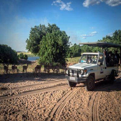 Джип-сафари по парку им Крюгера ЮАР