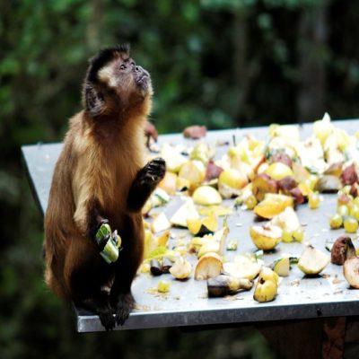 Мир обезьян в Плеттенберг-Бей ЮАР