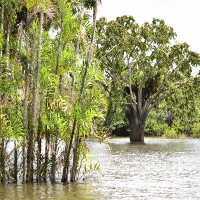 Река Куябено в Джунглях Амазонии Эквадор