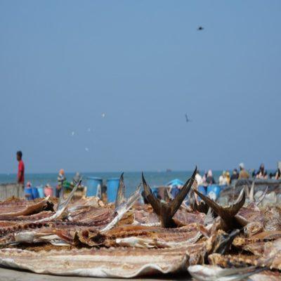 Рыбный рынок в Негомбо Шри Ланка