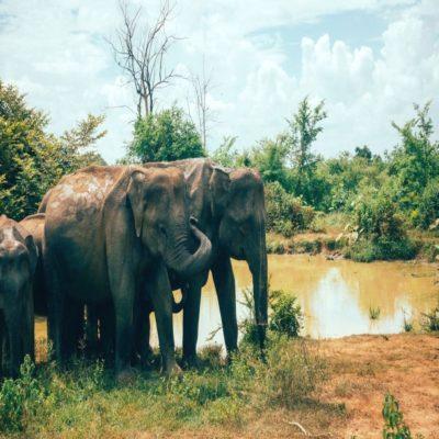 Национальный парк Удавалаве Шри-Ланка