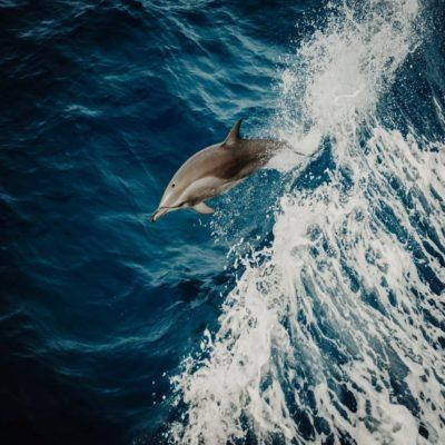 Дельфин Мальдивы