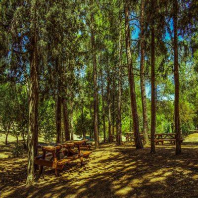 Лес Троодоса Кипр