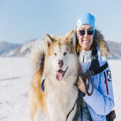 Дружелюбные сибирские собаки