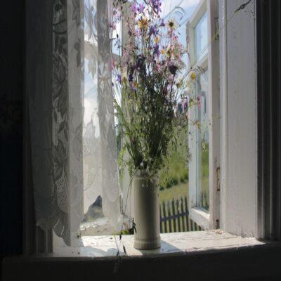 Полевые цветы Веспы Ленинградская область Россия