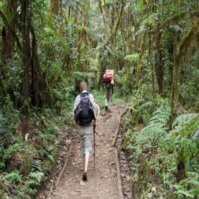 Дорога через тропический лес Килиманджаро Танзания
