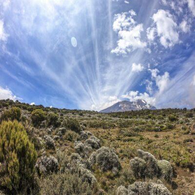 Карликовые деревья и кустарники по пути Килиманджаро Танзания