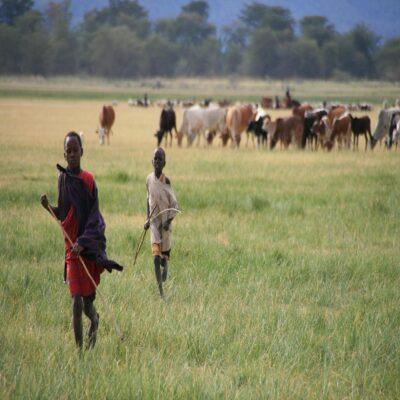 Маленькие пастухи озеро Маньяра Танзания