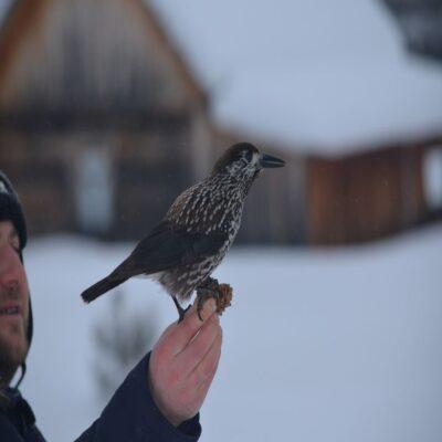 Почти ручные птицы Хакусы