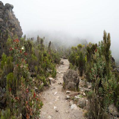 Туманные высоты Килиманджаро Танзания