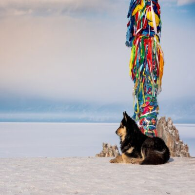 Собака у священного столба сэгрэ Мыс Бурхан (скала Шаманка) Байкал
