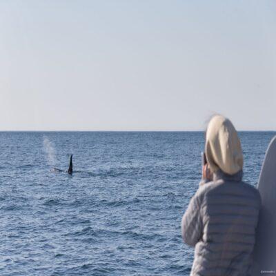 Камчатские киты Камчатка