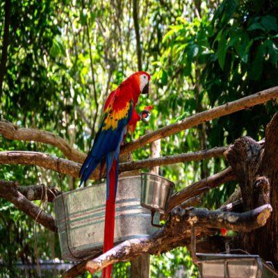Попугай в Паленке Мексика