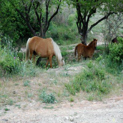 Крымские кони Крым