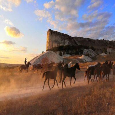 Перегон табуна у Белой скалы Крым