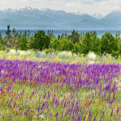 Цветущие луга у Севана Армения
