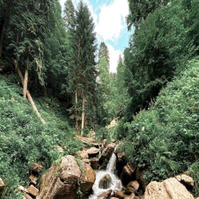 Лес в горах Красной Поляны