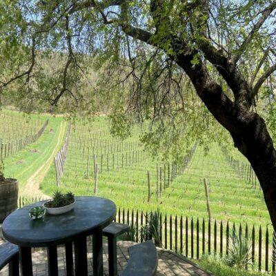 Виноградники и частная винодельня Крым