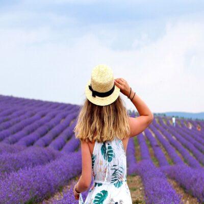 Цветущие поля лаванды Крым
