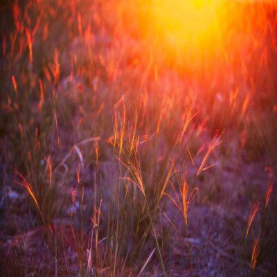 Закатное разнотравье