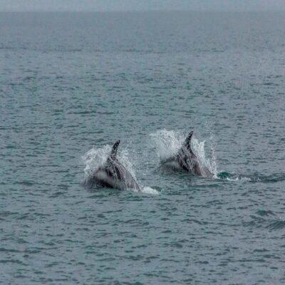 Спины китов Териберка Мурманская область