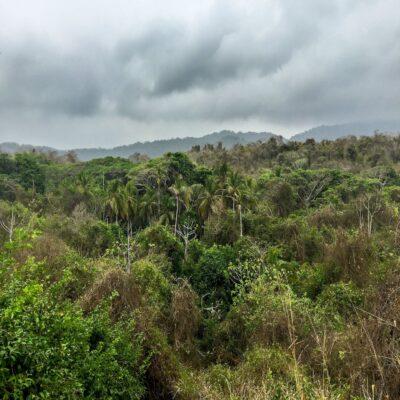 Джунгли Тайроны Колумбия