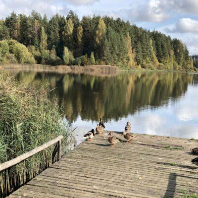Жители озера Кучане Михайловское Пушкинские горы Пушгоры