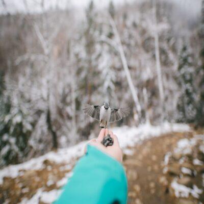 Знакомство с лесными жителями