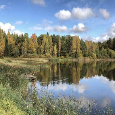 Озеро Кучане Михайловское Пушкинские горы Пушгоры