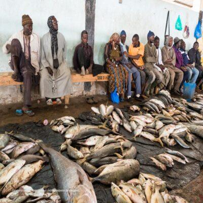 Рыбный рынок Сенегал