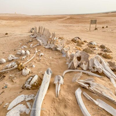 Скелет Мавритания